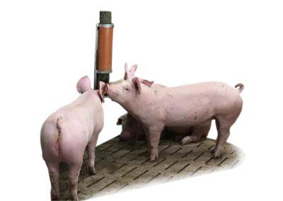 Beschäftigungsmaterial für Ihre Schweine
